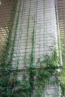 壁面緑化ワイヤーブラケットシステム 納入実績3