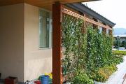 壁面緑化ワイヤーブラケットシステム 納入実績4