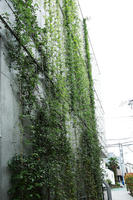 壁面緑化ワイヤーブラケットシステム 納入実績9